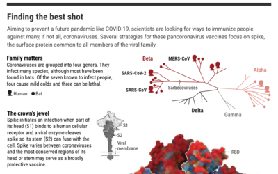 Vaccines that can protect against many coronaviruses could prevent another pandemic